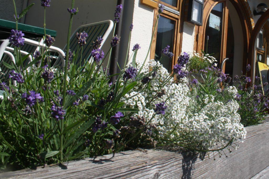 bloemenwandelweken gasthof auwirt oostenrijk glutenvrije vakantie